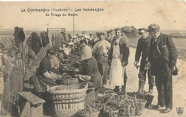Vendanges m tier ancien for Porte carte postale sur pied